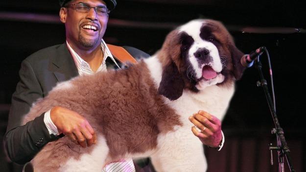 dog guitar 2