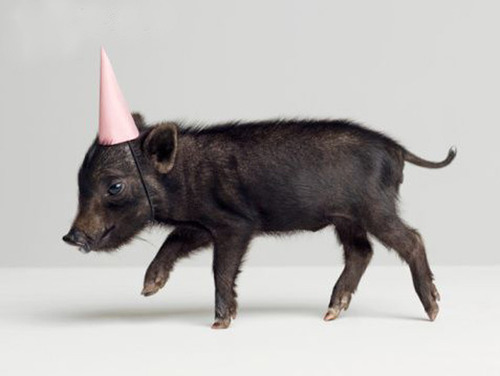 Zoë, I was going to find an African party animal, but then I found party pig...How could I resist??