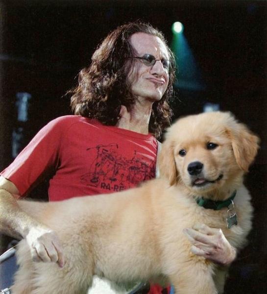 dog guitar 5