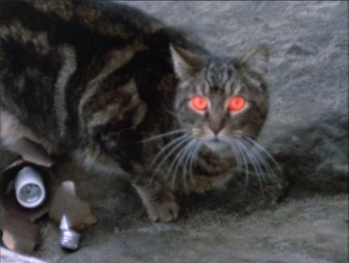 satanic cat amityville